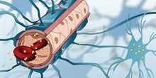 Penetrating the blood brain barrier